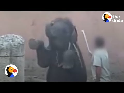 Baby Elephant Abuse Caught on Tape: Elephants Suffer in German Zoo | The Dodo