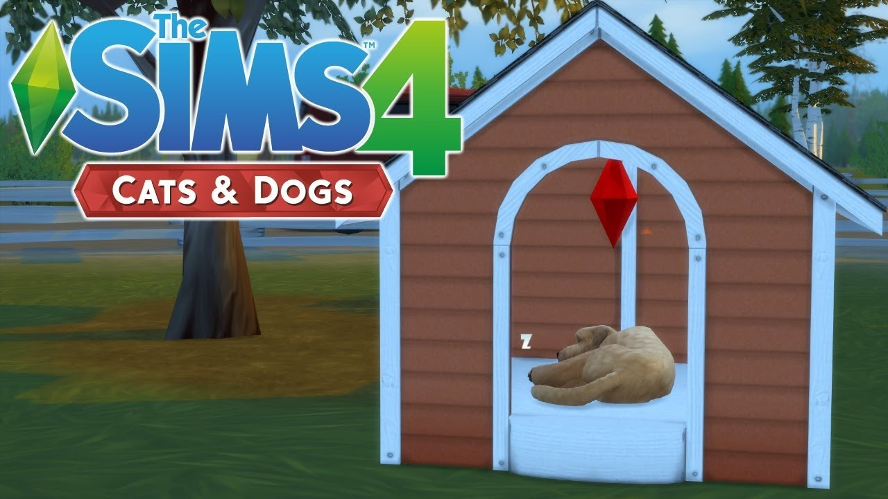 Cats And Dogs Sims  What Time Uk