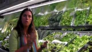 2 of 4 Green Smoothie Shopping for Greens by Jennifer Thompson