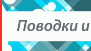 одежда аксессуары трусики дождевики комбинезоны собак обувь мебель недорого Киев, BrilLion-Club 3795