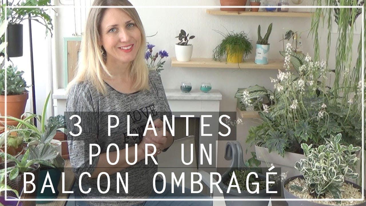 100 Génial Conseils Plante Pour Balcon Ombre