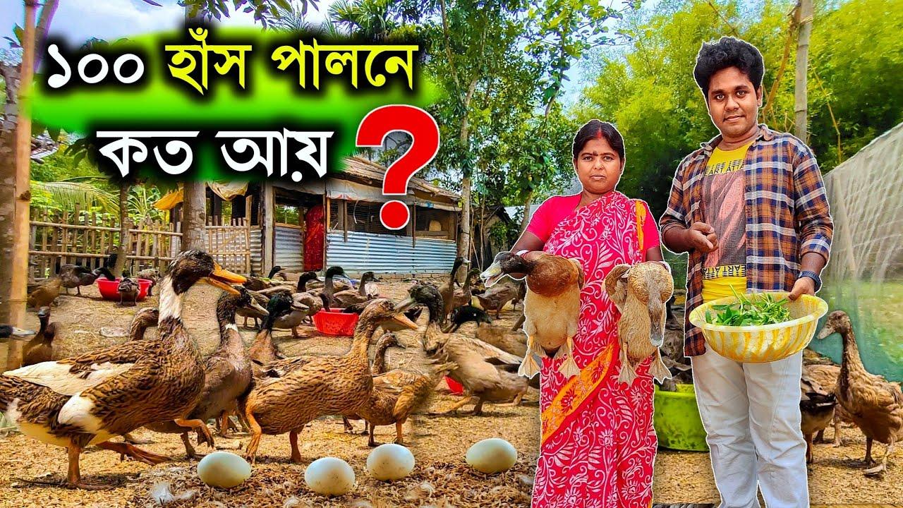 Download ১০০ খাঁকি ক্যাম্ববেল হাঁস পালনে কত আয় ? how to start duck farming | khaki campbell duck farm