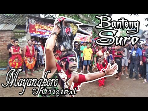 "Banteng Suro Solah ""Galak"" Jaranan Mayangkoro Original Live Bulusari Tarokan"