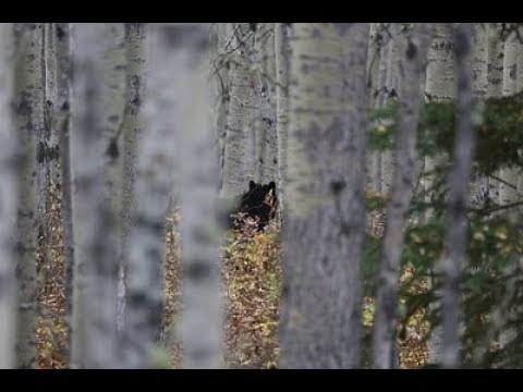 SASQUATCH, A Guides Story And Common Sense, ( Re Loaded In HD )