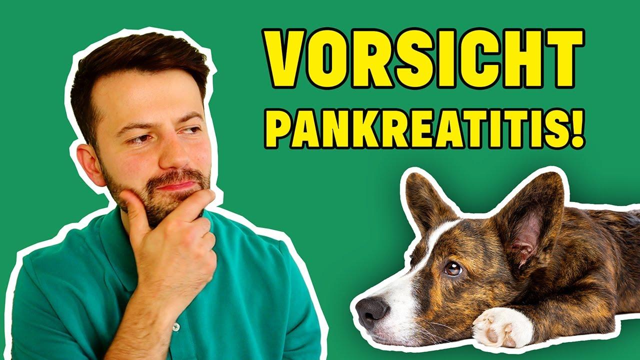 Bauchspeicheldrüsenentzündung Hund: Erkennen & Richtig handeln! (Tierarzt klärt auf)
