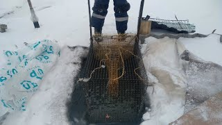 Рыбалка 2021 на Хищника Зимой Щука Карась на Мормышку Проверяем Мордушки