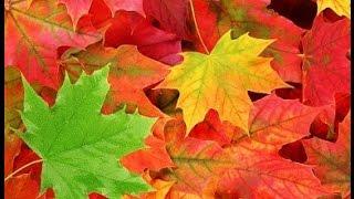 'Осень' музыка  Сергея Чекалина Music Sergey CHEKALIN. 'Autumn'. Beautiful russian music. 美しいロシアの音楽