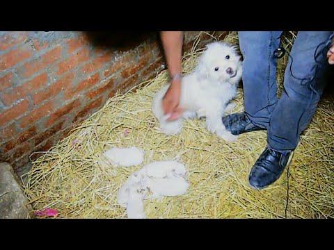 لحظه تقابل الكلبين مشمش ومشمشه بعد فراق 14 يوم بسبب الولادة