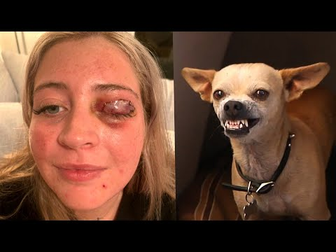 Womans-Eyelid-Ripped-Off-by-Stylists-Chihuahua