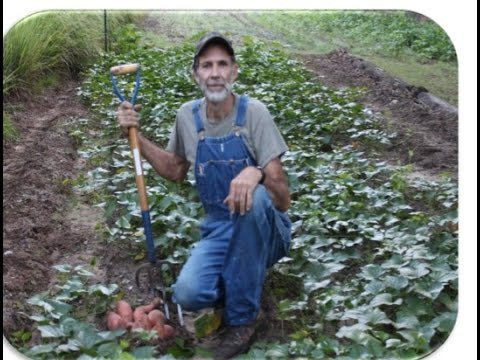 How to Grow Sweet Potatoes -- The Great Appalachian Homesteading Conference