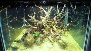 Island Paludarium 360° - DIY Climate Rain System HD - 2013