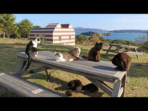 A Cat Lover's Paradise - Japan's Cat Island