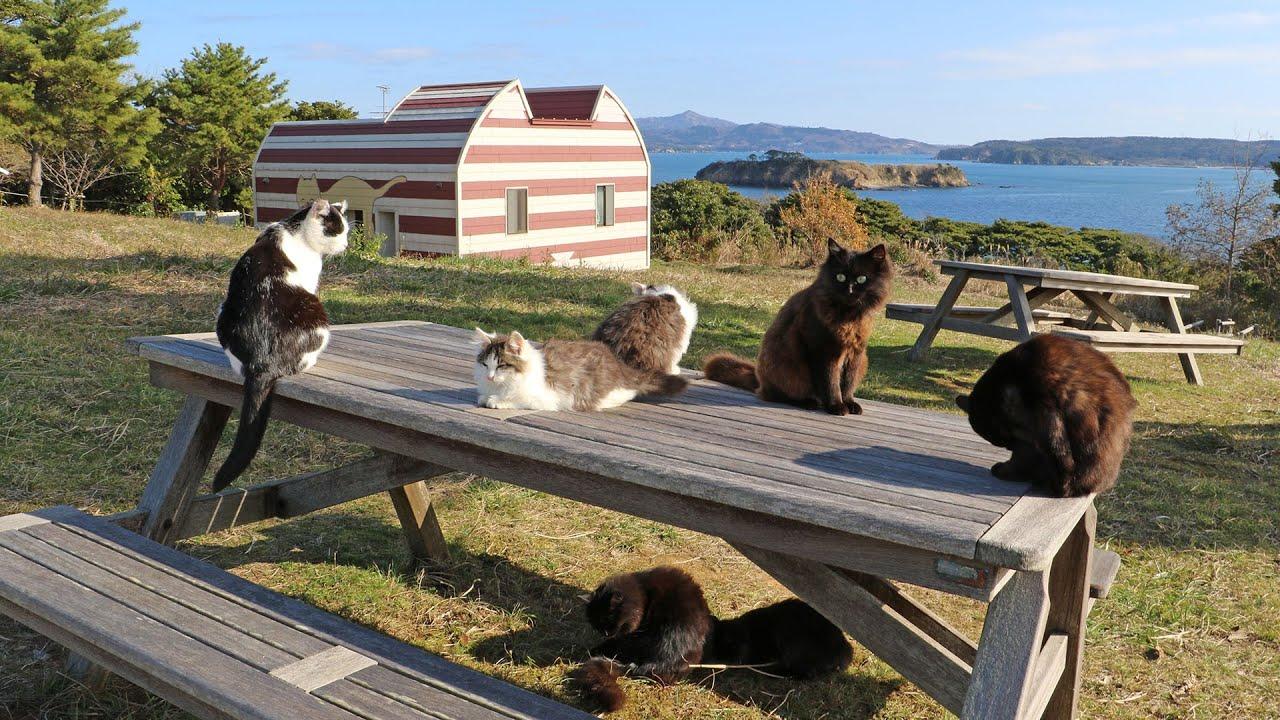 A Cat Lover S Paradise Japan S Cat Island Youtube