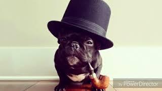 """Пранк """"Собачий петух"""", развод телефонного мошенника, как зек возвращает собаку"""