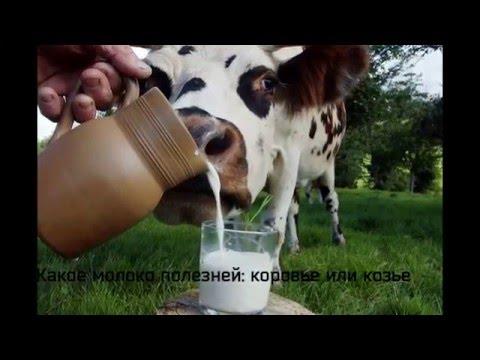 Какое молоко полезное? - Узнать отличие и ценность молока