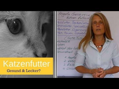 Katzenfutter - Was Katzen Essen (wollen) 🍽 Webinar