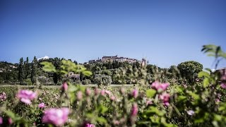 The Quest for Essences Episode 1 – May Rose in Grasse