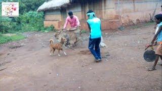 FUN WITH HOUSE DOG l 2 man vs deshi indian barker deshi kutta/deshi kutta vs deshi man
