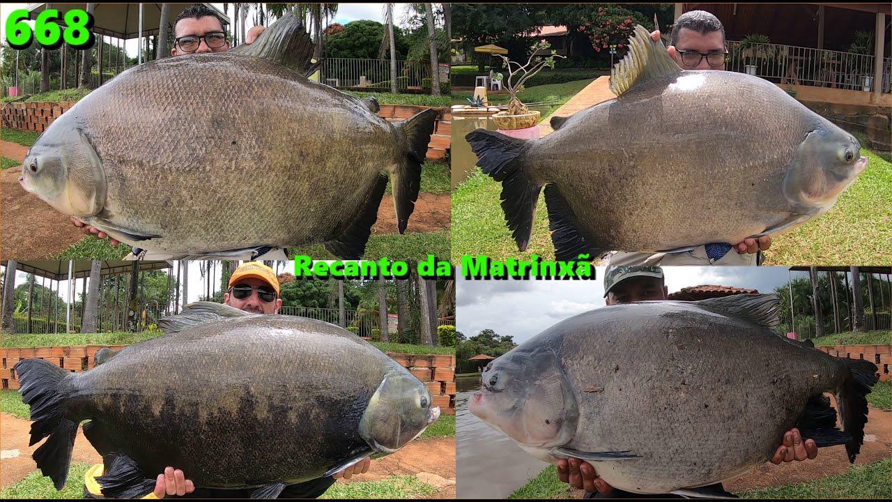 Grandes Tambacus e Pirararas no Recanto da Matrinxã em Goianira - Programa Fishingtur 668
