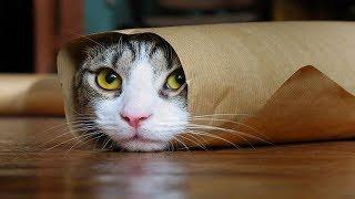 Очень смешные собаки и кошки: видео приколы