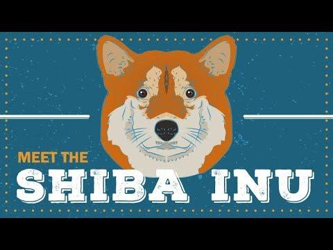 Shiba Inu | Breed Profile