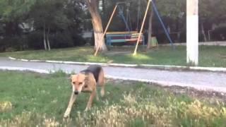 Новороссийск, кот, собака