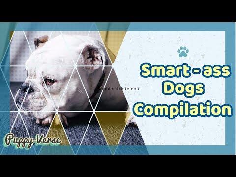 Smart-ass Dogs Compilation | Puppy-Verse
