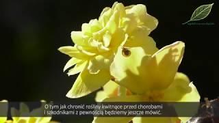 Ogrodnicze SOS odc. 8. Rośliny kwitnące - szkodniki i choroby na kwiatach