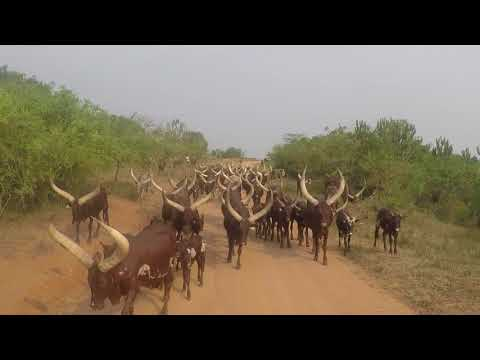 UGANDA Road Trip   GoPro Travel Video