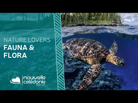 Flora and Fauna - New Caledonia