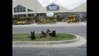 Dogs On Downs At Lowe's With Cold Creek Dog Training, Gettysburg Pa