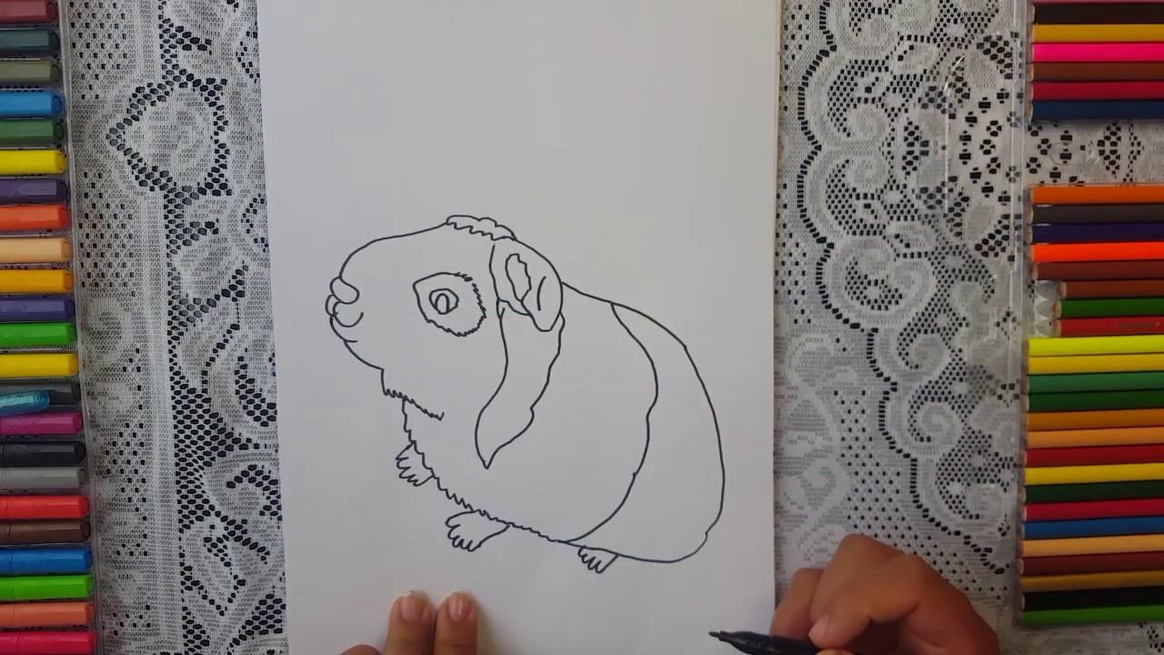 Dibujar Y Colorear Cuy Dibujos Para Ninos Youtube