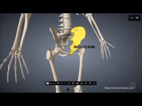 Übersicht Skelettsystem-Teil 1 - YouTube