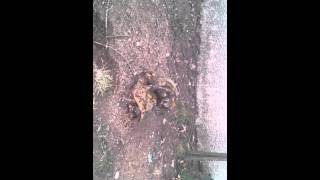 tortue porno xxx.mp4