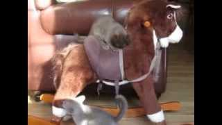 Rocking Horse Kitten Jockeys