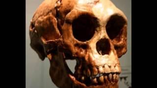perdebatan pithecanthropus erctus ke homo erectus