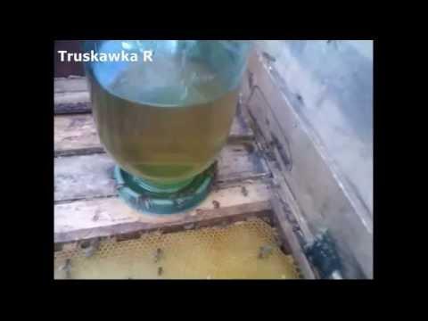 Сахарная подкормка пчёл. Плюсы и минусы.