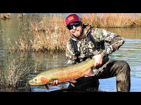 MULTIPLE GIANT WINTER STEELHEADS