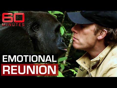 Man and gorilla's