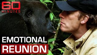 Man and gorilla's unforgettable reunion after years apart | 60 Minutes Australia