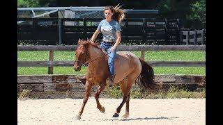 Kentucky Extreme Mustang Makeover 2018 - Eevee