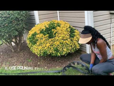 Feisty's Landscaping (DIY Flower Bed Edging) Yard Workout 🏋🏾‍♂️