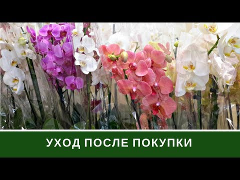 Как ухаживать за орхидеей видео