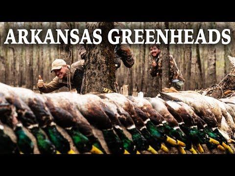 Back To Back Mallards In Arkansas | Duck Hunt