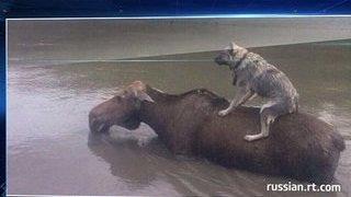 Зоопарк Уссурийска залило водой, животные погибли