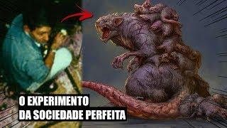 CONHEÇA O UNIVERSO 25 - A UTOPIA DOS RATOS
