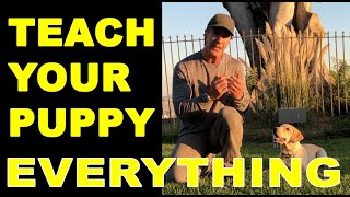 How to Train Your PUPPY to do Everything  Puppy Dog Training Video  Robert Cabral