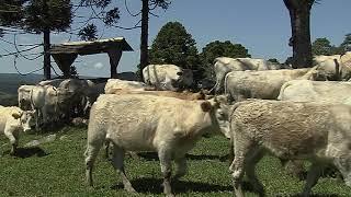 PL quer reduzir furtos de animais no campo