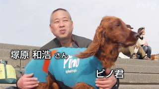 神奈川県藤沢市の湘南海岸に波乗りの名手がいる。ピノッキオ(愛称ピノ...