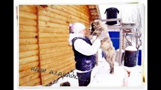 Как кормить собак-4/Bir köpek nasıl beslenir/How to feed a dog